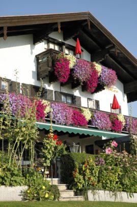 Blütenpracht an unseren Balkonen
